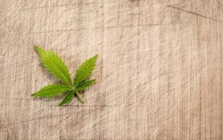 Marijuana Cannabis Lead on a Table